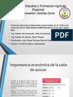 CAÑA DE AZÚCAR