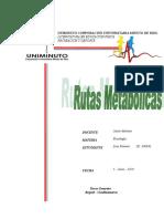 fisiologia rutas metabolicas