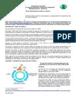 Reproducción Celular Mitosis - Ciclo 4 - 1P