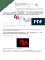 ACTIVIDAD 4 AÑO.pdf