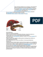 Anatomía y ficipatologia