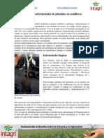 10. Manejo de enfermedades de plantulas en semilleros