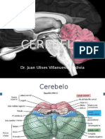 4-cerebelo2