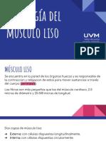 Fisiologia_del_musculo_liso