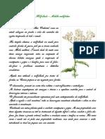 descrição_plantas medicinais_mesas