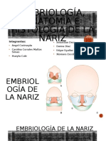 histologia expo nariz