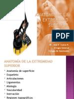 Anatomia de la extremidad superior