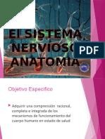 ANATOMIA_CLASE_IIPERD2015_BASES1_MODIFICADA.pptx