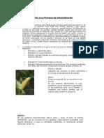 industrializacion del maiz