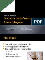 trabalho de enfermidades parasitolgicas