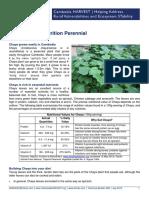 Pepaya jepang;Chaya Plant Profile