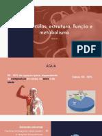 Funções biológicas - Aula III - Biomoléculas.pdf