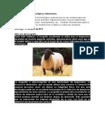 Salud y Avances Tecnológicos Veterinarios.docx