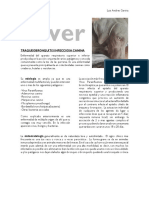 Silver Traqueobronquitis Infeciosa Canina, Reporte de Caso Final