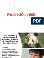CHARLA RESPIRACION CELULAR version reducida MARZO 2020