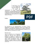 arboles nativos de colombia