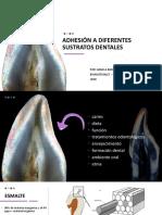 ADHESIÓN A DIFERENTES SUSTRATOS Dentales