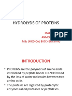 Hydrolysis of Proteins