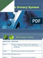 Urinary System Slides