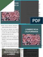 caracteristicas de la lombriz.pptx