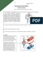 Guia Ciencias Octavo Circulatorio