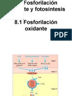 8.1 Fosforilación oxidante.pdf