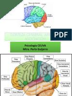 Áreas de La Corteza Cerebral_mixto