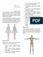 COMPILADO ANATOMÍA.pdf