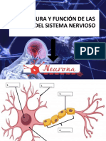 2. NEURONAS.pptx