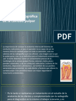 anatomia-topografica.pptx
