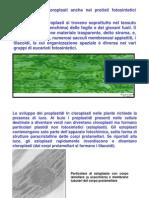 Plastidi II
