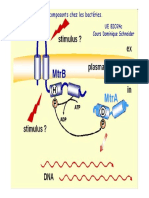 Les systèmes à deux composants chez les bactéries. Les systèmes à deux composants chez les bactéries. UE BIO24c Cours Dominique Schneider