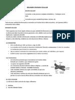 Resumen Modificado Division Celular (1)