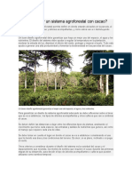 Cómo diseñar un sistema agroforestal con cacao.docx