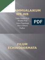 filum echinodermata.pptx