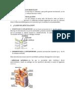 Los Musculos.docx