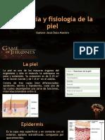 anatomia de la piel y heridas