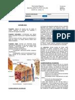 7. Sistema óseo C4.docx