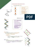 DNA RNA.docx