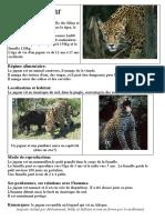 expo_jaguar