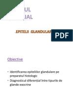 03.Tesut epitelial_2_2019_site.pptx