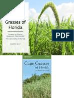 8-Prince_Cane_Grasses_of_Florida3