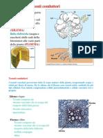 Tessuti conduttori I