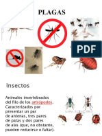 Clases  Insectos Plagas 1ª parte