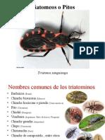 Clases plagas Insectos 2ª parte