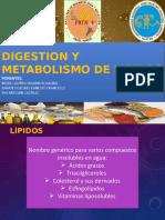 EVA - DIGESTION-Y-METABOLISMO-DE-LIPIDOS ÚLTIMO.pptx