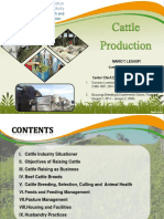 Cattle Production and Management