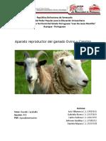 Aparato Reproductor Del Ganado Ovino y Caprino