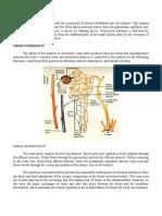 Urine-Formation.pdf