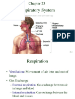 The Respiratory System.pdf